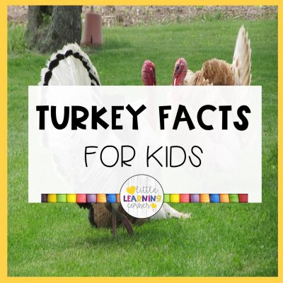 25 Fun Facts About Turkeys for Kids