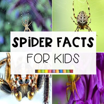 10 Fun Spider Facts for Kids