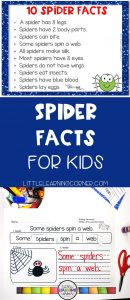 spider-facts-for-kids-pin