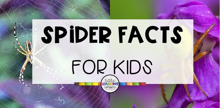 spider-facts-for-kids-top