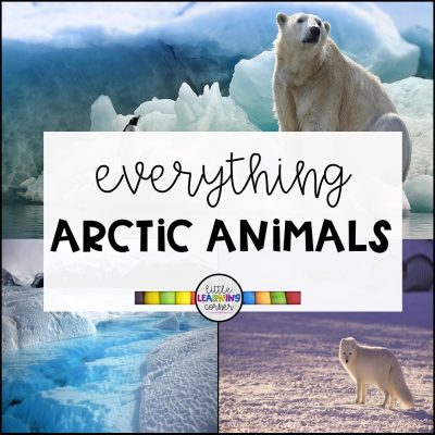 Everything Arctic Animals for Kids